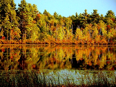 Flint Pond Fall 1.jpg